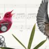 『金鶏』と『夜鳴き鶯』 - ロシアオペラ雑記