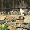 香川県 ねこ島(佐栁島)長崎集落へ、長い1本道、お腹いっぱいの猫達、感じた事...