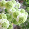 【 Happy Flower Friday ‼︎ 】vol.13