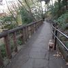 本門寺公園で見つけた紅葉の紅葉!