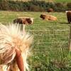 牛の餌が足りない!!