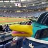 今回のグルメはヘルメット付き!ドームで野球観戦編その3(341)