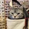 猫たち毎月のフィラリア予防接種へ。体重測定〜