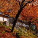 京を歩けば。