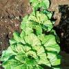 【無農薬野菜】ってむずかしい?JA農業体験秋冬野菜を作ろう