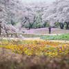 桜と芝桜の競演が楽しめる「東武トレジャーガーデン」は夢のような庭園でした!