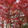 奈良県立民俗博物館の紅葉(11月下旬)