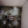 ポストの中に鳥の卵が(*''▽'')(*''▽'')