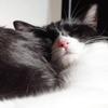 今日の黒猫モモ&白黒猫ナナの動画ー808