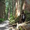 初夏の長野旅行:憧れの杉並木を歩き戸隠神社奥社へ