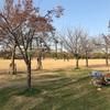 長居公園 桜