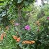 庭のワイヤ作品