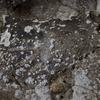 「先史時代の岩絵の世界」その3