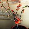 今年も咲いた鉢植えの花