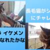 長毛猫がシャンプーにチャレンジ サラサラ・イケメン・ボーイになれたかな