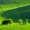 ④知って得する色の活用術〜緑色のヒミツ〜
