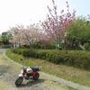 モンキー海を渡るat渡鹿野島 その4 県道渡船場と八重垣神社