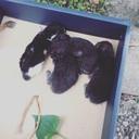黒猫兄弟と三姉妹