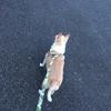ワンコの息子1匹づつとお散歩を楽しむ♡