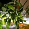 植物の浄化作用