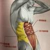 腹筋にはどんな筋肉がある??鍛えるメリットは??腹筋の筋肉を知って筋トレを効率化しよう!