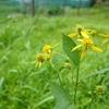 花風景(ミツバチ草)