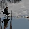 🐧舎人公園の水鳥🐓