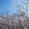 4/4(木)午前中は冬‥で、午後は春