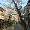 〔日記〕桜道を歩いて帰る