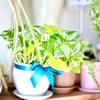 一人暮らしにオススメな観葉植物