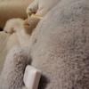 猫と犬の違いーー腫瘍