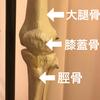 屈伸の動作での膝の痛み