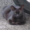 黒猫との遭遇