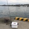 4月5日耳川カマス釣り 《カマス釣れてます》 ~悔しいです!!(ザブングル風)~
