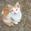 3Dプリンターでルアー作ってみろっ!(その47)ネコが可愛すぎて釣にならないぞコノヤロ!
