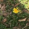 春(*゚▽゚)ノ その2