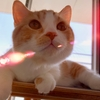 【猫学】実は、3ヶ月間会社を休んで猫活してました