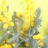 家の中に緑を増やそうpart2!植物は心と体を癒してリラックスさせてくれるよ
