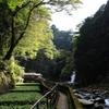 「静岡わさび」が日本農業遺産に登録される見通しに