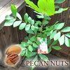 これからの時代に当たり前になっていくものは学ばなくてはね。~君はピーカンナッツを見たか?~