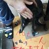 甲斐犬サンと生ビールとぺちこん。の巻〜むずむずシタノォ(´°̥̥̥̥̥̥̥̥ω°̥̥̥̥̥̥̥̥`)。