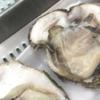 【六日目】生牡蠣のおいしさ