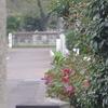 10月23日 駒込にある霊園から西巣鴨ほかの猫さま とその情景
