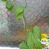グリーンカーテン3年目 ゴーヤーの追加と肥料の購入