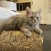 川越の猫カフェ、猫家に行ってきた!