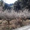北川村宗ノ上の風景