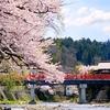 今年も桜が満開になりました。