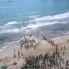 南伊豆で開催予定の第5回弓ヶ浜国際オープンウォータースイムは中止