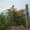 滝子山の花々2    2009.5.27