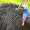 荒谷竜太 世界一危険な鳥?